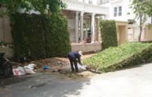 Cung cấp và thi công tường cây si