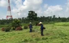 Dịch vụ cắt cỏ, phát hoang