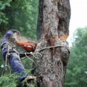 Dịch vụ chặt cây xanh