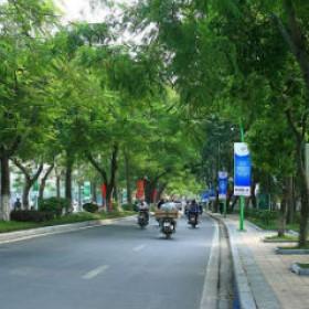 Những loại cây nên trồng trong khu vực Đô thị