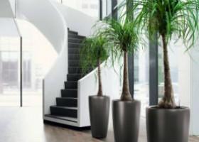 Cách chăm sóc cây cảnh trồng trong nhà