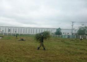 Cắt cỏ nhà máy BK Bình Dương
