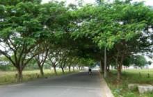 Một số loại cây các công trình thường sử dụng