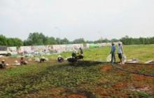 Quá trình trồng, chăm sóc cỏ lá gừng cho công trình