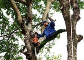 Một số hình ảnh thực hiện dịch vụ chặt cây xanh