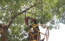 Tại sao chúng ta nên mé nhánh cây thường xuyên?