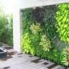 Hướng dẫn tự làm tường cây tại nhà