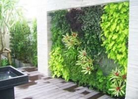 Hướng dẫn tự làm tường cây trang trí tại nhà