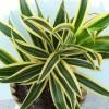 Những loại cây giúp hấp thụ khí độc trong nhà