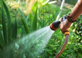 Những nguyên tắc khi tưới nước cho cây cảnh