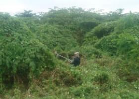 Tại sao phải cắt cỏ phát quang thường xuyên?