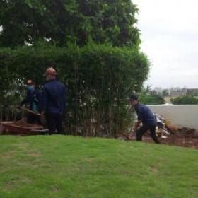 Dịch vụ cải tạo sân vườn