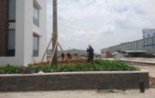 Cung cấp và trồng cây cho Nhà máy cà phê hòa tan Intimex