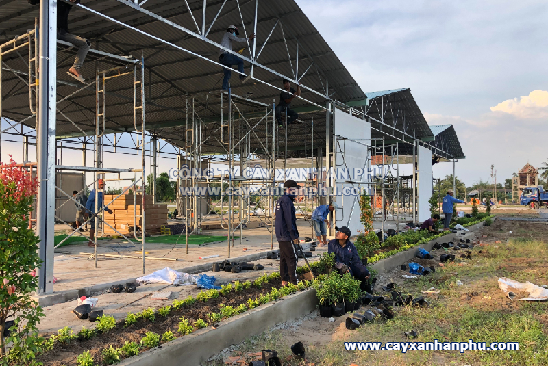 trồng cây xanh tại long an