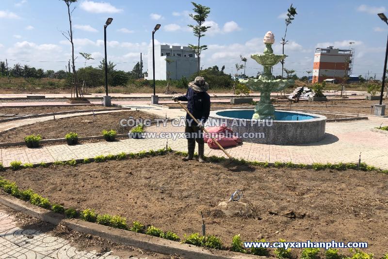 trồng cây xanh long an