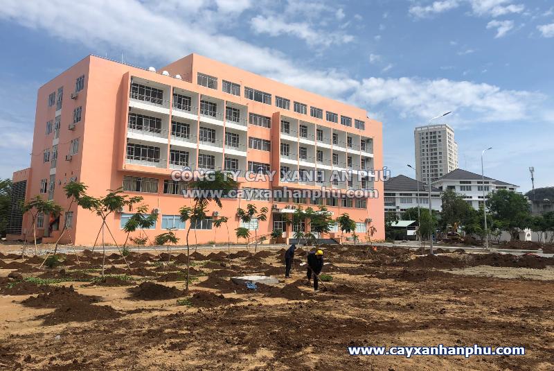 Công ty cây xanh tại Vũng Tàu