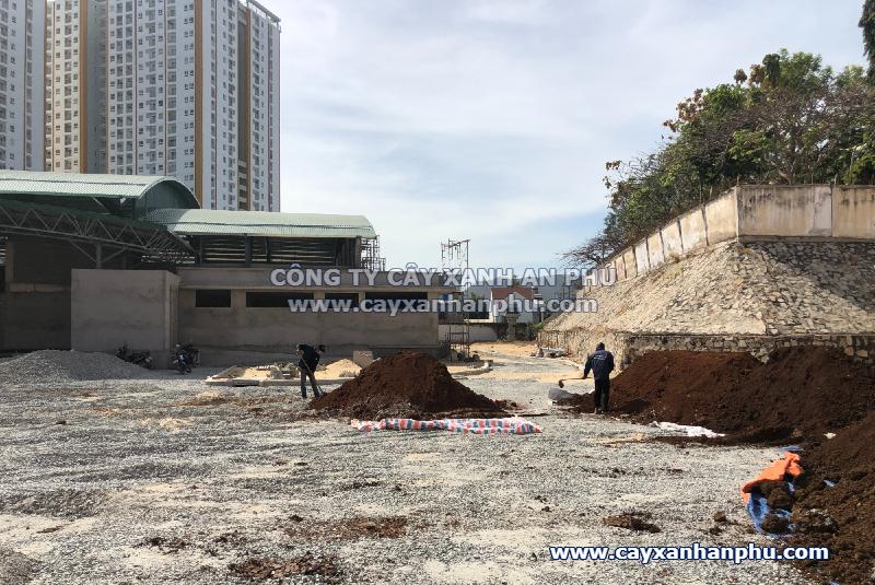 Công ty cây xanh tại Bà Rịa Vũng Tàu