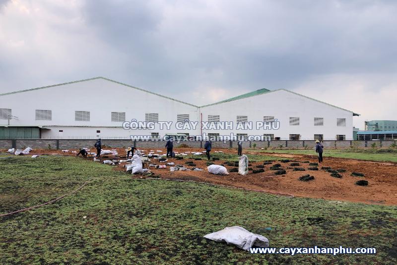 dịch vụ trồng cỏ tại đồng nai