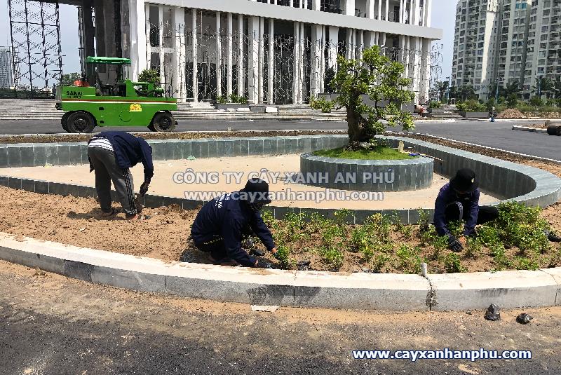 Trồng cây dự án Trường ĐH Văn Hiến