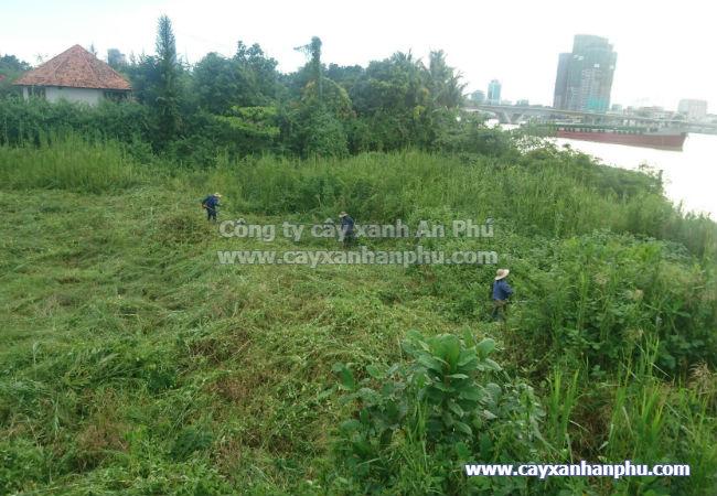 Dịch vụ cắt cỏ, dich vu cat co cho dự án tại TP HCM