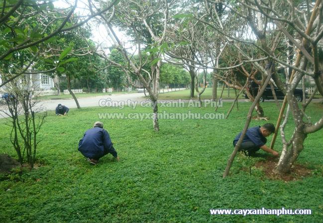 Dịch vụ chăm sóc cây xanh, dich vu cham soc cay xanh, bảo dưỡng cây xanh