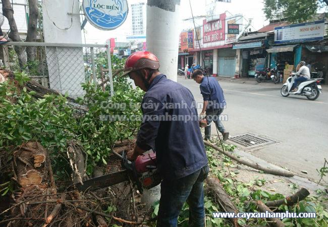 Dịch vụ chặt cây, dich vu chat cay xanh