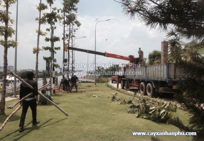 Dịch vụ trồng cây xanh, trồng cây công trình