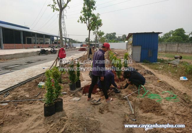 Dịch vụ trồng cây xanh, trồng cây cảnh