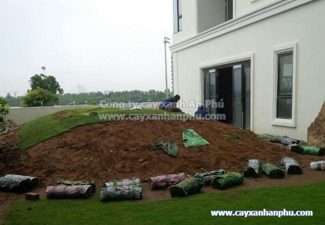 Dịch vụ trồng cỏ, dich vu trong co nhật