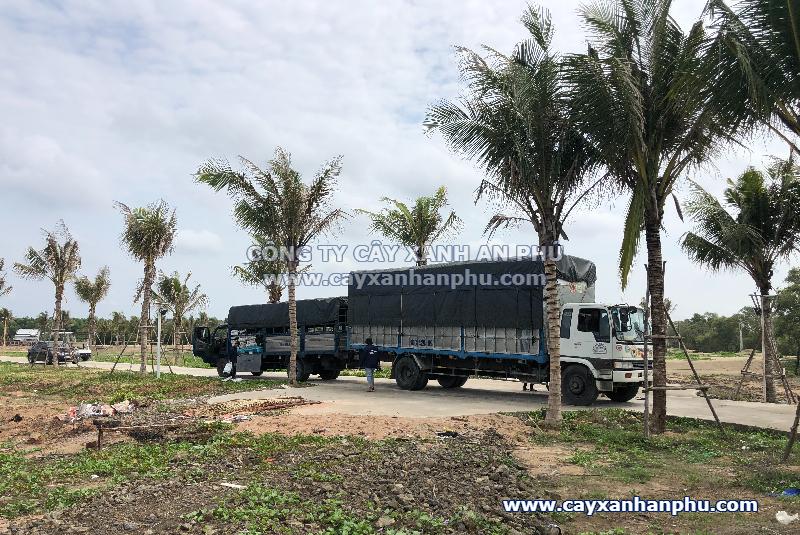 Trồng cây dự án tại Bà Rịa - Vũng Tàu