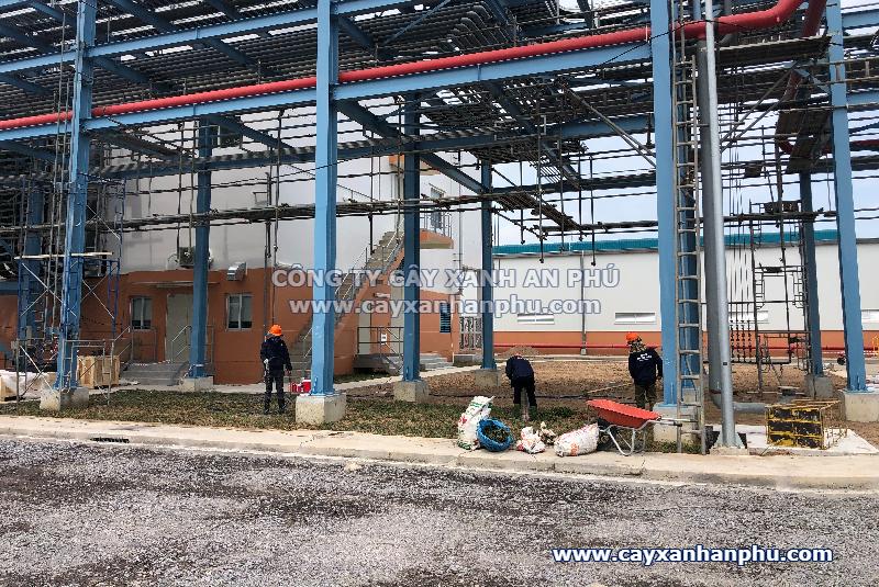 Dịch vụ trồng cỏ tại Nhơn Trạch, Đồng Nai
