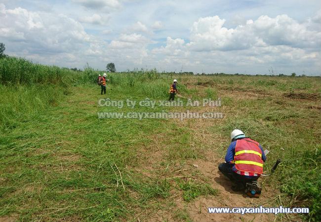 Dịch vụ cắt cỏ tại củ chi 2