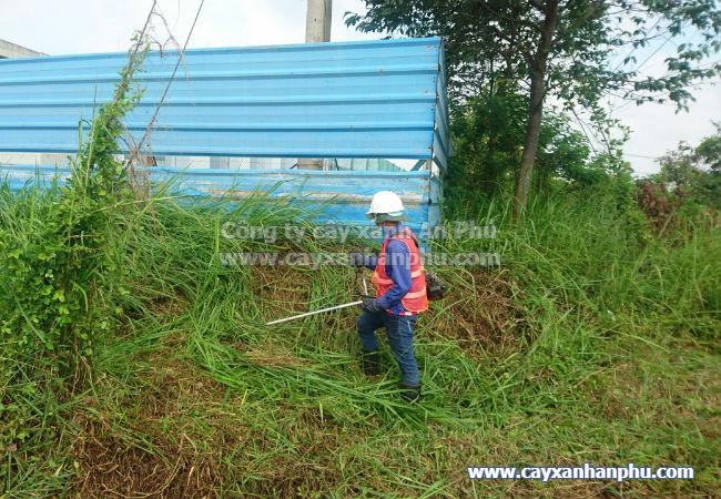 Dịch vụ cắt cỏ tại củ chi 4