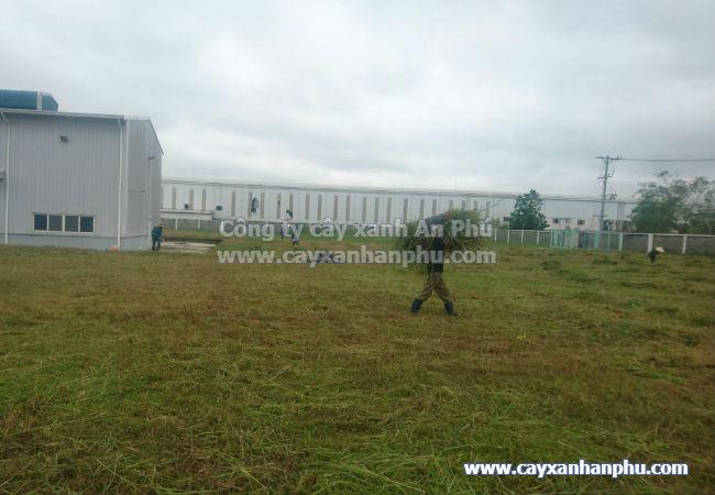 Dịch vụ cắt cỏ BK 7