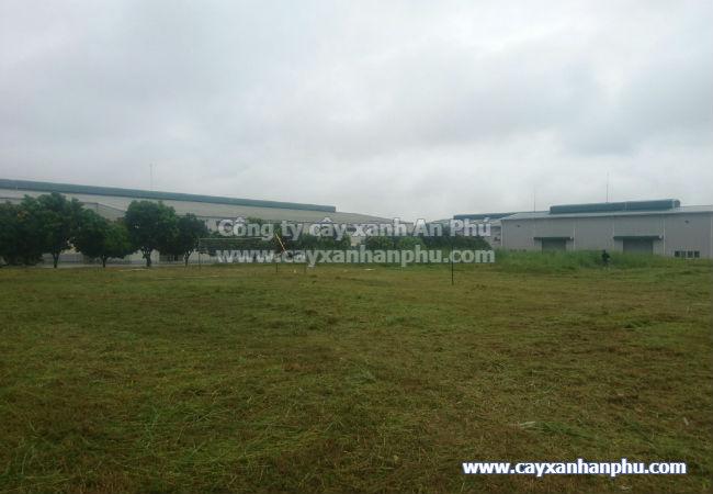 Dịch vụ cắt cỏ BK 5