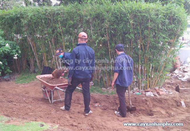 Kỹ thuật trồng cỏ lông heo