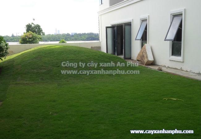 Thảm cỏ nhung nhật khi hoàn thiện