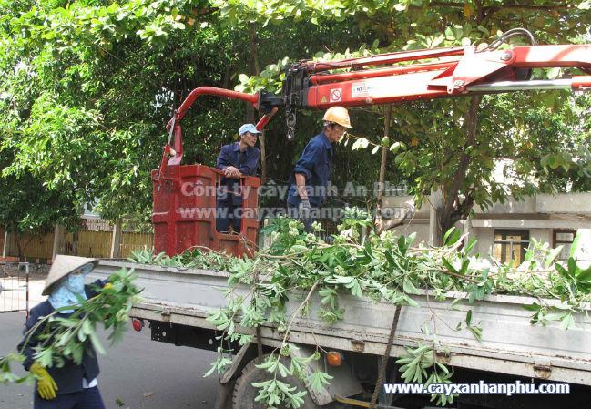 Dịch vụ chặt cây trường học