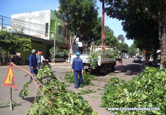 Dịch vụ chặt cây xanh ven đường