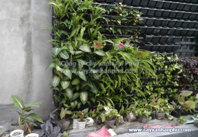 Trồng cây vào module tường cây xanh