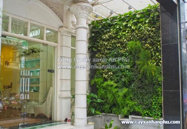 Tường cây xanh ở trước nhà