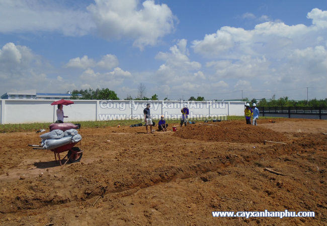 Dịch vụ trồng cỏ đậu phộng giá rẻ