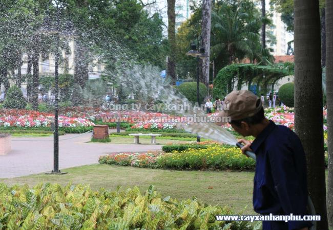 Nguyên tắc tưới nước cho cây cảnh
