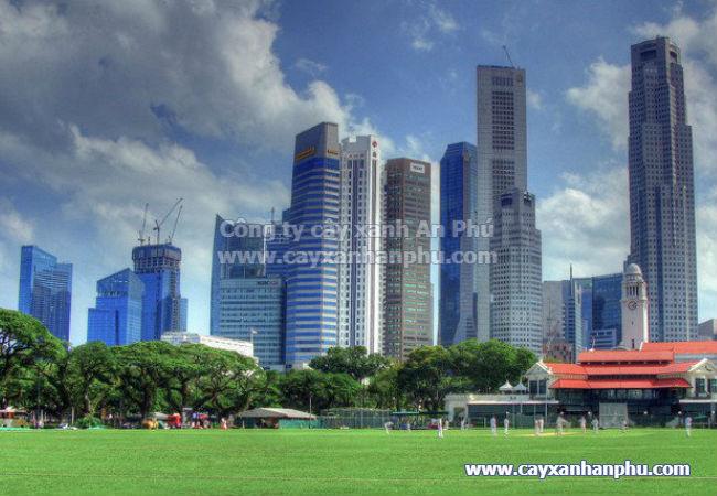 Cây xanh thành phố 2
