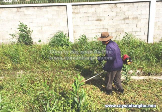 dịch vụ cắt cỏ bình dương