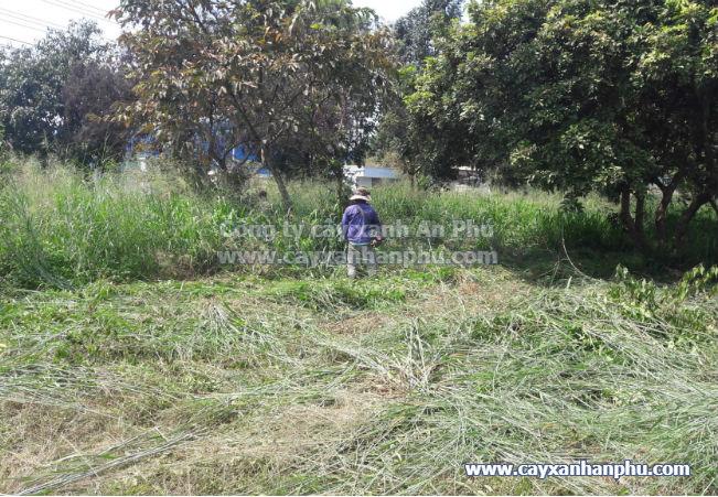 Dịch vụ cắt cỏ VNPT Bình Dương 6