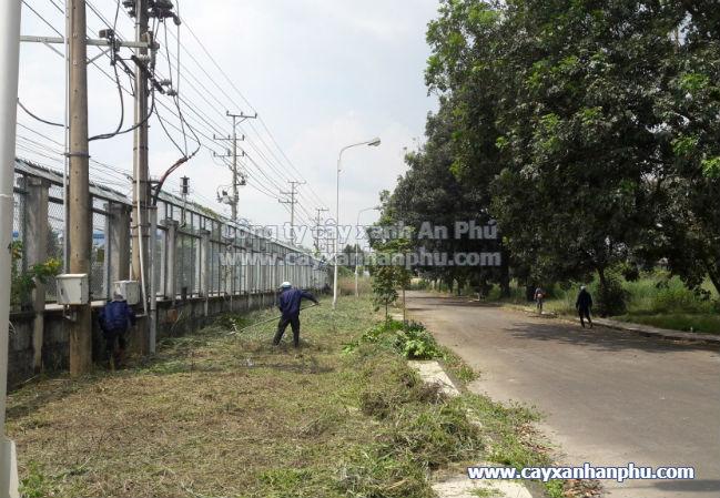 Dịch vụ cắt cỏ VNPT Bình Dương2