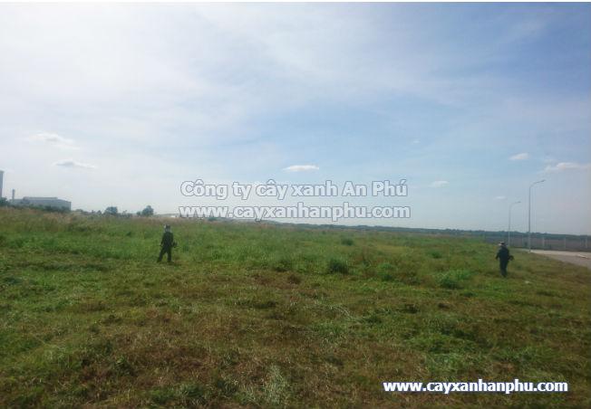dịch vụ cắt cỏ đồng nai