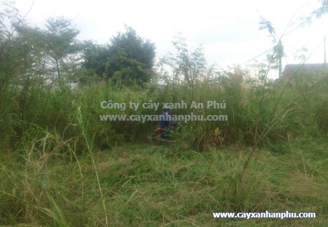 Cắt cỏ tại đồng nai, Cat co tai dong nai