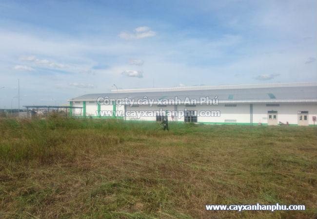 Cắt cỏ nhà máy Vinasoy Bình Dương
